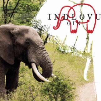 Izindlovu.org - blov.be -Indlovu Classic Gin 750ml met exclusieve karakter en smaken van Afrika